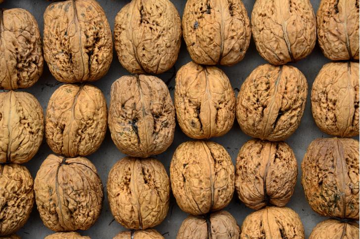 Фото №1 - Ученые раскрыли происхождение грецкого ореха