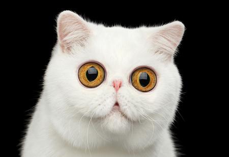Тест: Нейросеть научилась генерировать котиков. Сможешь отличить их от настоящих?