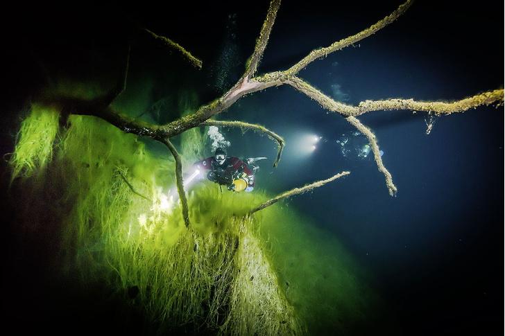 Фото №4 - Наука: сокровища морей