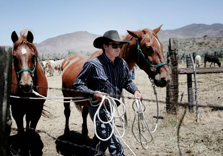 Фото №1 - Ученые выяснили, почему фыркают лошади