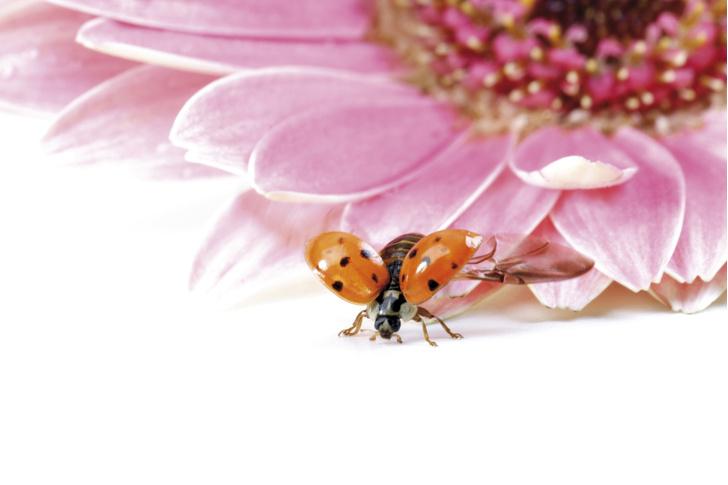 Фото №1 - Ученые рассказали о темпах исчезновения насекомых