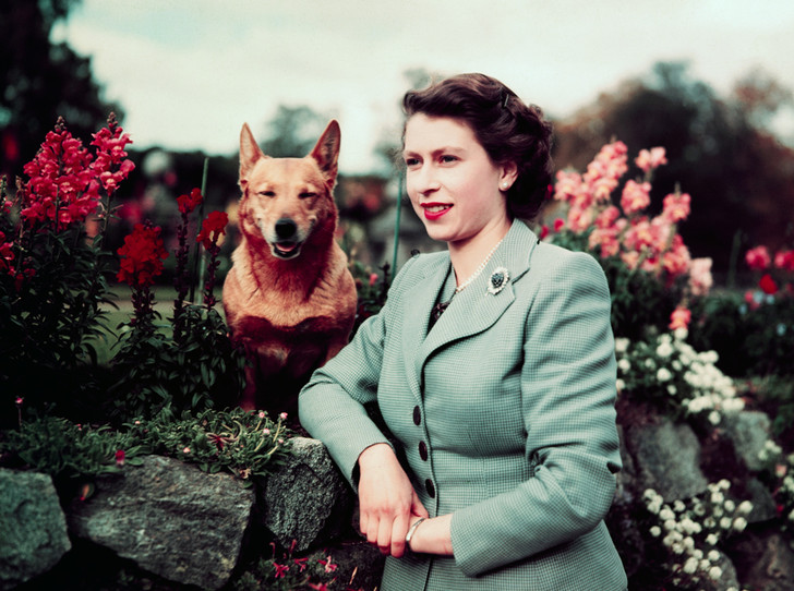 Фото №13 - Елизавета II и ее корги: история главной королевской страсти