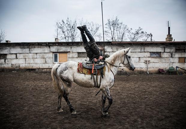 Фото №1 - Уральские казаки подали заявку на президентский грант для создания зоополиции