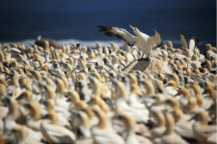 Фото №1 - Повелитель птиц
