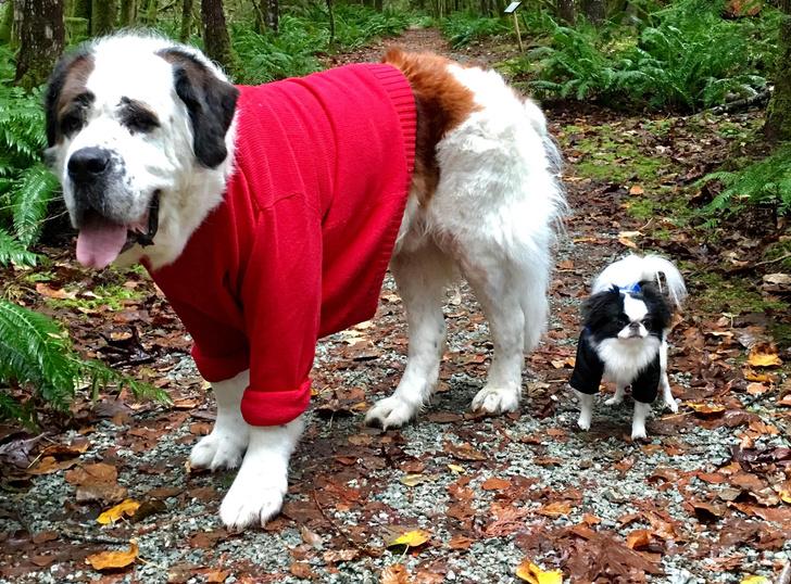 Фото №1 - Как размер собаки влияет на ее умственные способности?