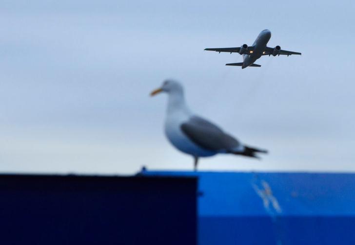 Фото №1 - Что опаснее для самолета: птица или дрон?