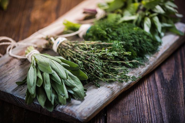 Фото №4 - Лечебные травы: как правильно собирать и применять