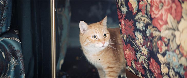 Фото №6 - Мясо в качестве зарплаты, дублеры и тишина на площадке: как работают коты-актеры