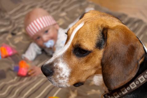 Фото №1 - Что делать, если ребенка укусила собака?