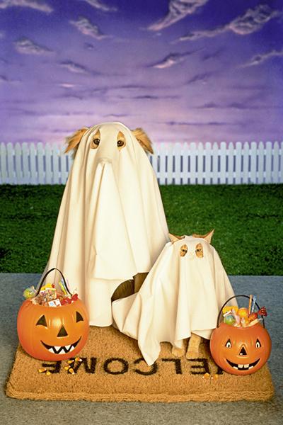 Фото №8 - Фотоподборка недели: собаки, которые уже готовы к Хэллоуину