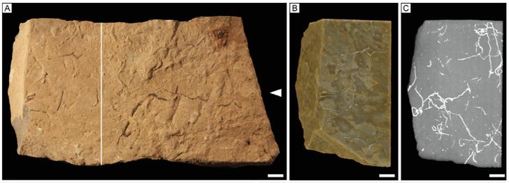 Фото №1 - Найдены древнейшие норы морских организмов