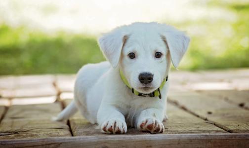 Фото №1 - В Роспотребнадзоре объяснили, может ли коронавирус передаваться через домашних животных