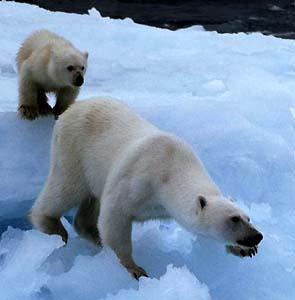 Фото №1 - В Арктике обнаружены неизвестные ранее острова