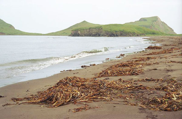 Фото №4 - Вниз по реке к планете Океан