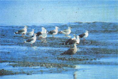 Фото №2 - Кордон на полуострове Кони
