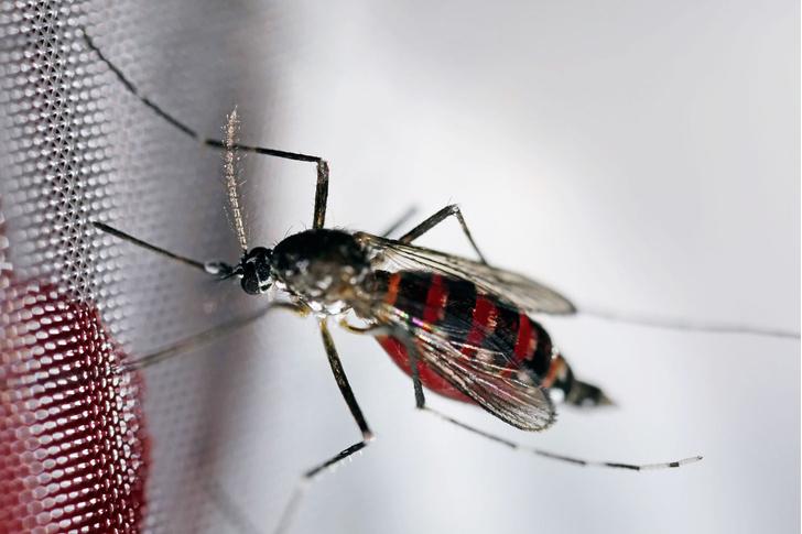 Фото №2 - Источник заразы: животные, которые нас убивают