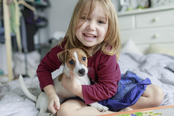 Фото №1 - Точная формула: как перевести возраст собаки в человеческий