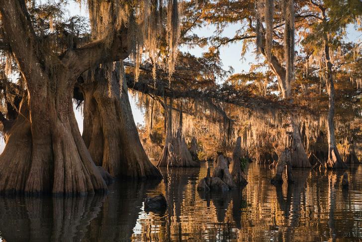 Фото №8 - Притягательная трясина: 12 самых живописных болот мира