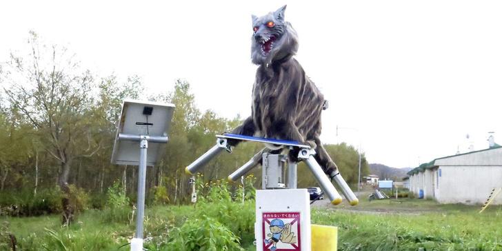 Фото №1 - В Японии появились роботы-волки