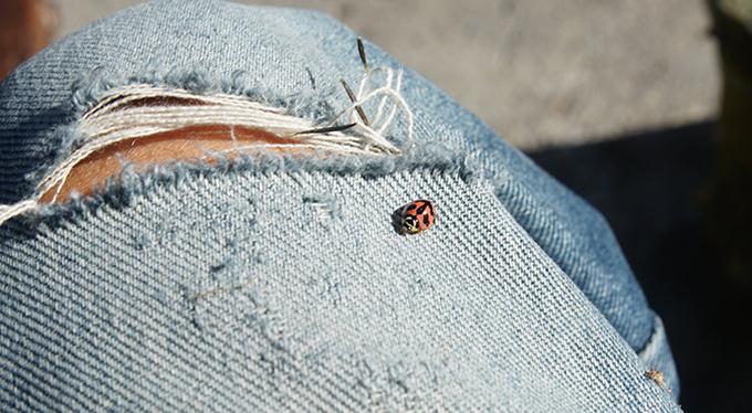 Я боюсь насекомых
