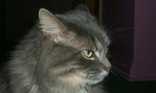 Фото №1 - Россиянин умер из-за укуса своей кошки