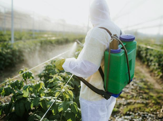 Фото №8 - Что нужно знать о настоящих органических продуктах (и о том, как их вычислить)