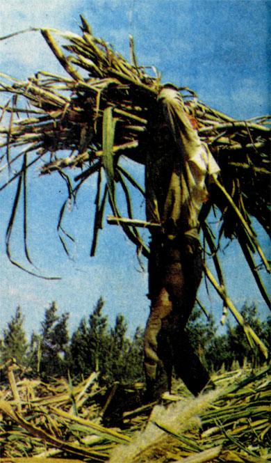 Фото №3 - Пока растет тростник...