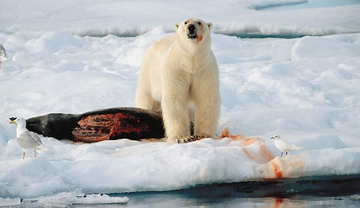Фото №3 - Охотники на тюленей