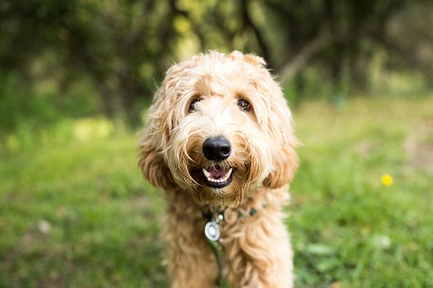 Фото №3 - Как назвать собаку: 20 эффектных кличек