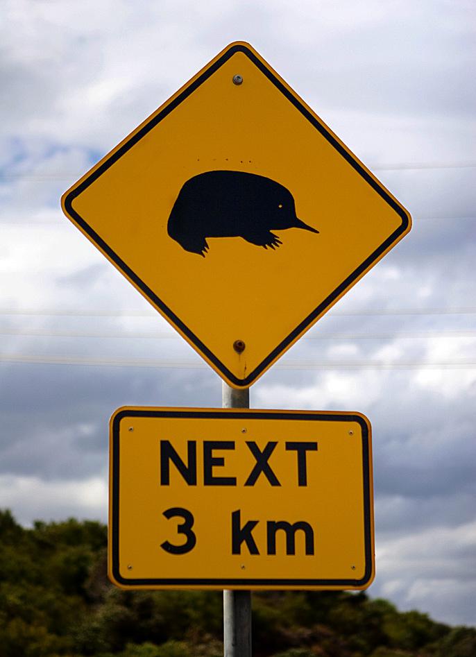 Фото №5 - Гремучая смесь: самое удивительное животное Австралии
