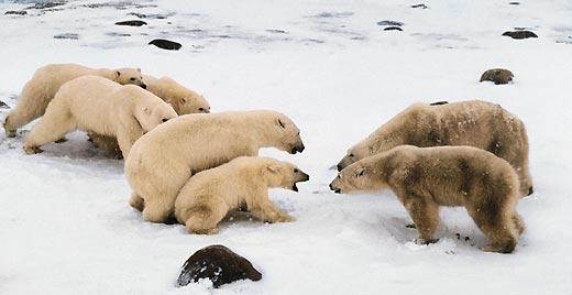 Фото №5 - Охотники на тюленей