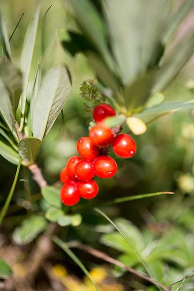Фото №9 - Опасная ботаника: от каких растений стоит держаться подальше