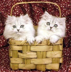 Фото №1 - Кошки размножаются из-за глобального потепления