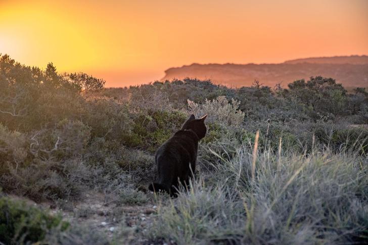 Фото №1 - В Австралии власти объявили войну кошкам