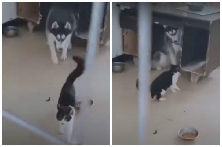 Фото №1 - Кот по-пацански показывает псу, кто тут главный (видео)