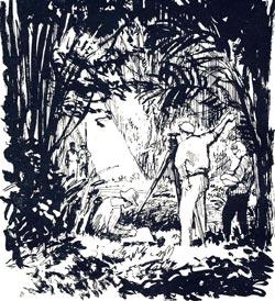 Фото №2 - Идем через джунгли