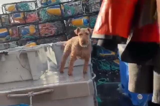Фото №1 - Собака демонстрирует чудеса устойчивости на корабле во время качки (видео)