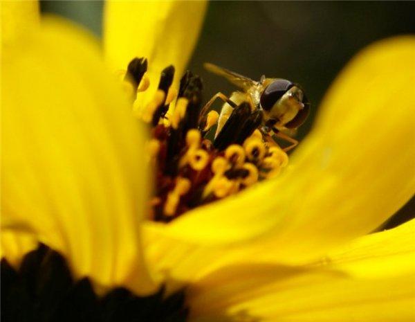 Фото №4 - Игра с природой в простые цвета
