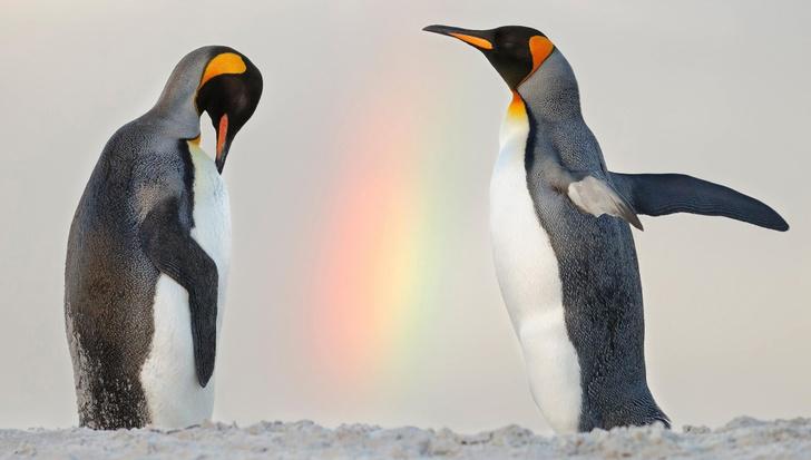 Фото №1 - День пингвинов