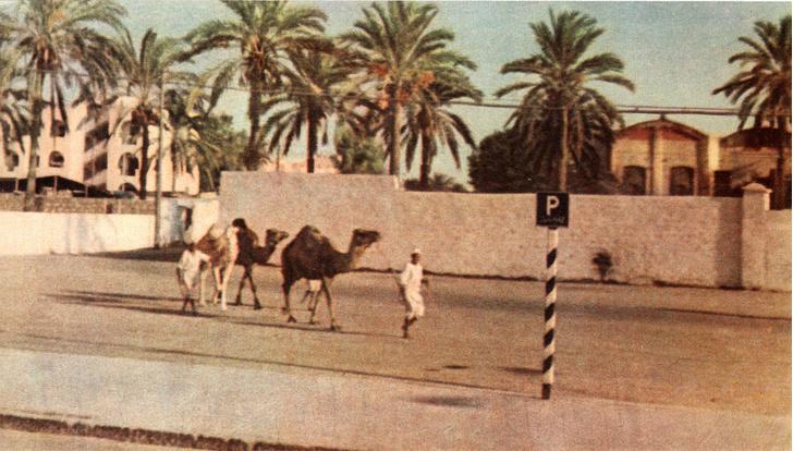 Фото №1 - В тени сияющих мечетей