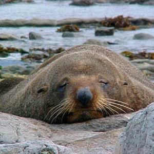 Фото №1 - Сотню мертвых тюленей нашли на Каспии