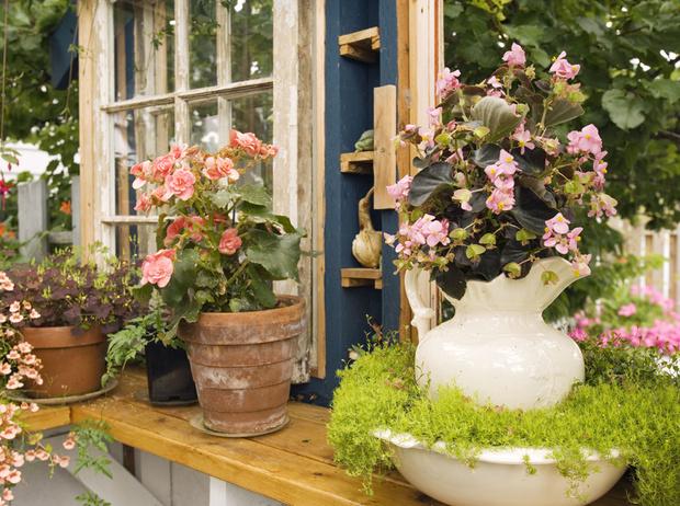 Фото №9 - 5 лучших растений для вертикального озеленения садового участка