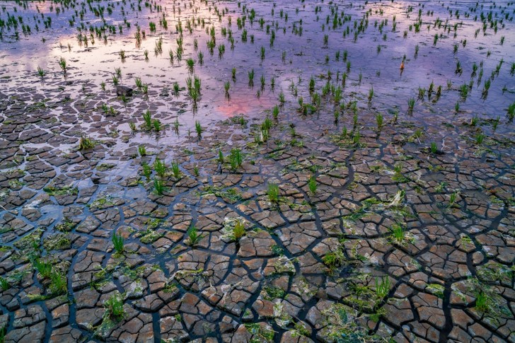 Фото №1 - После засухи