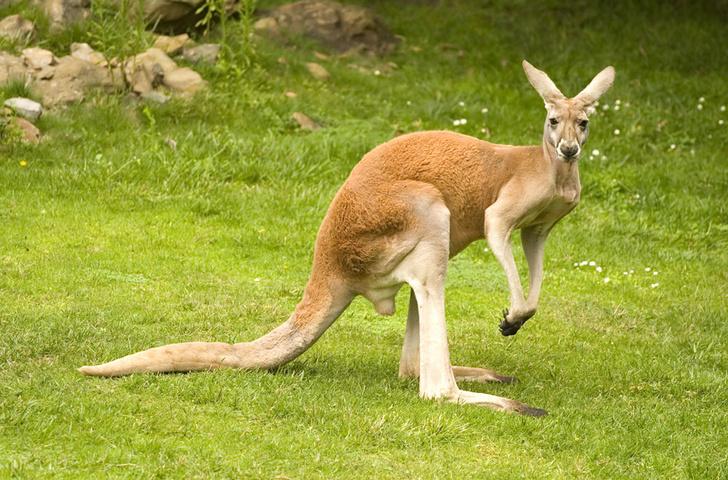 Фото №1 - Австралия: Параллельный мир