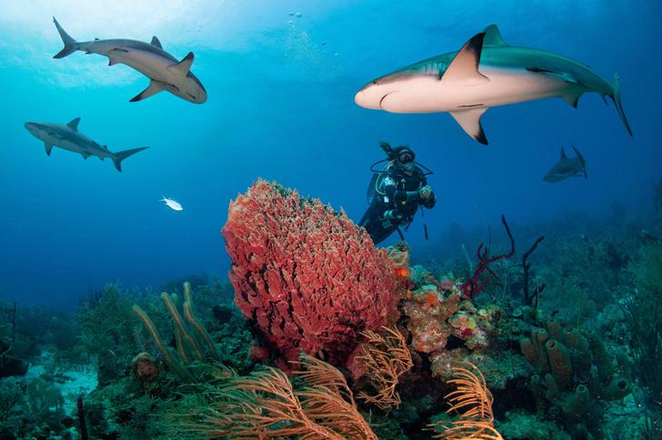 Фото №1 - За 7000 лет популяция акул сократилась в три раза