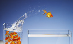 Как подобрать по совместимости аквариумных рыбок для одного аквариума