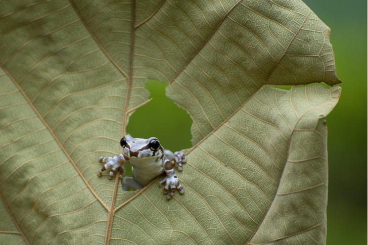 Фото №1 - Любопытная лягушка