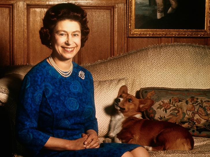 Фото №1 - Елизавета II и ее корги: история главной королевской страсти