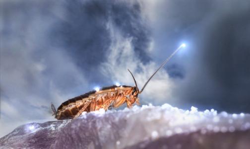 Фото №1 - Чтобы не отравиться вместе с тараканами. Роспотребнадзор оценил средства, которые используются для борьбы с насекомыми