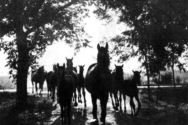 Фото №1 - Всадники спешат в Балмазуйварош